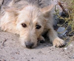 585611-old-dog